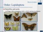 order lepidoptera