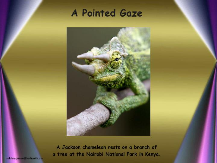 A pointed gaze