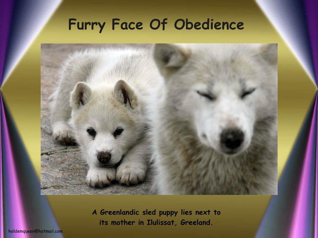Furry Face Of Obedience