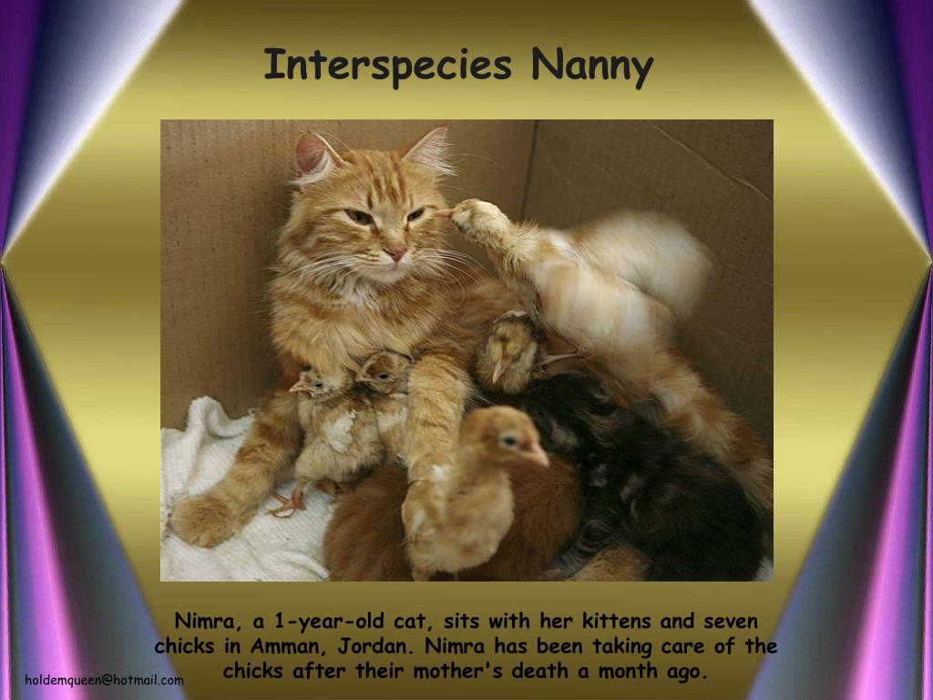 Interspecies Nanny