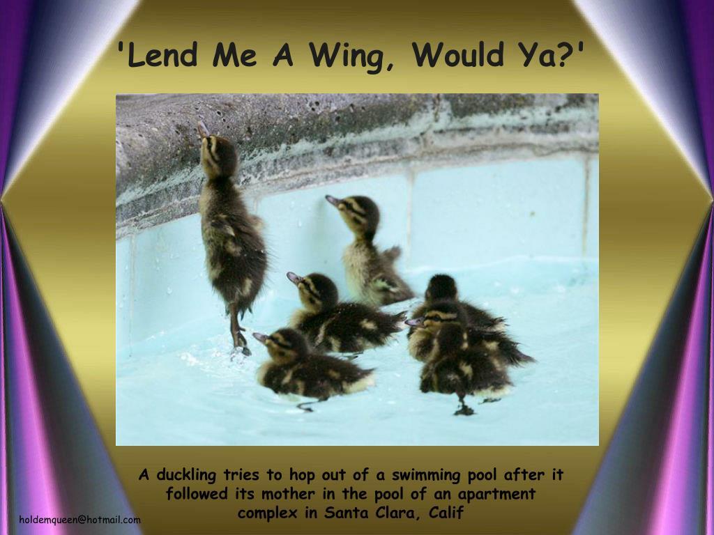 'Lend Me A Wing, Would Ya?'