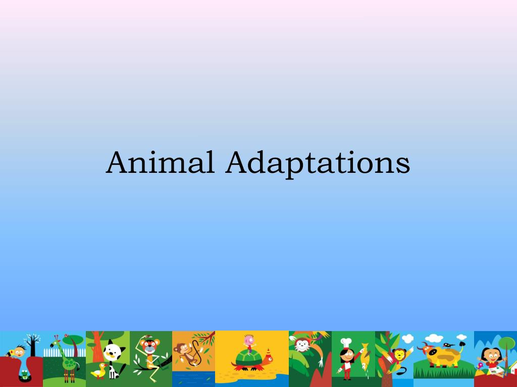 animal adaptations l.