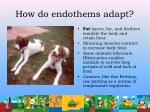 how do endothems adapt