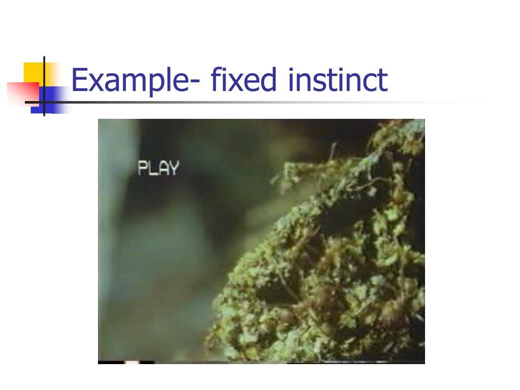 Example- fixed instinct
