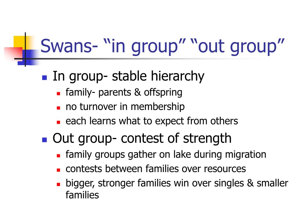 """Swans- """"in group"""" """"out group"""""""
