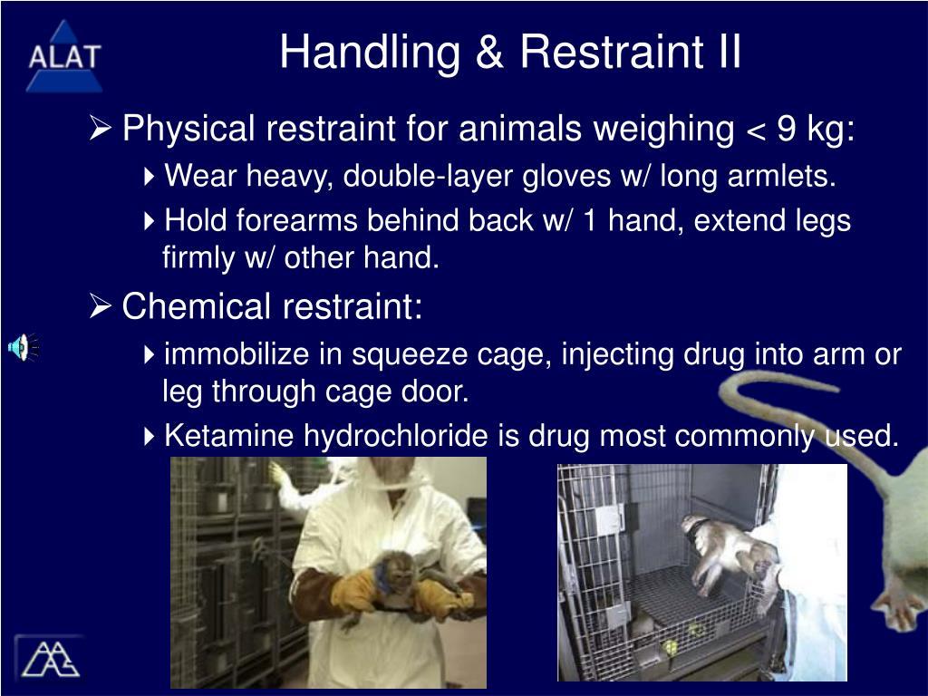 Handling & Restraint II