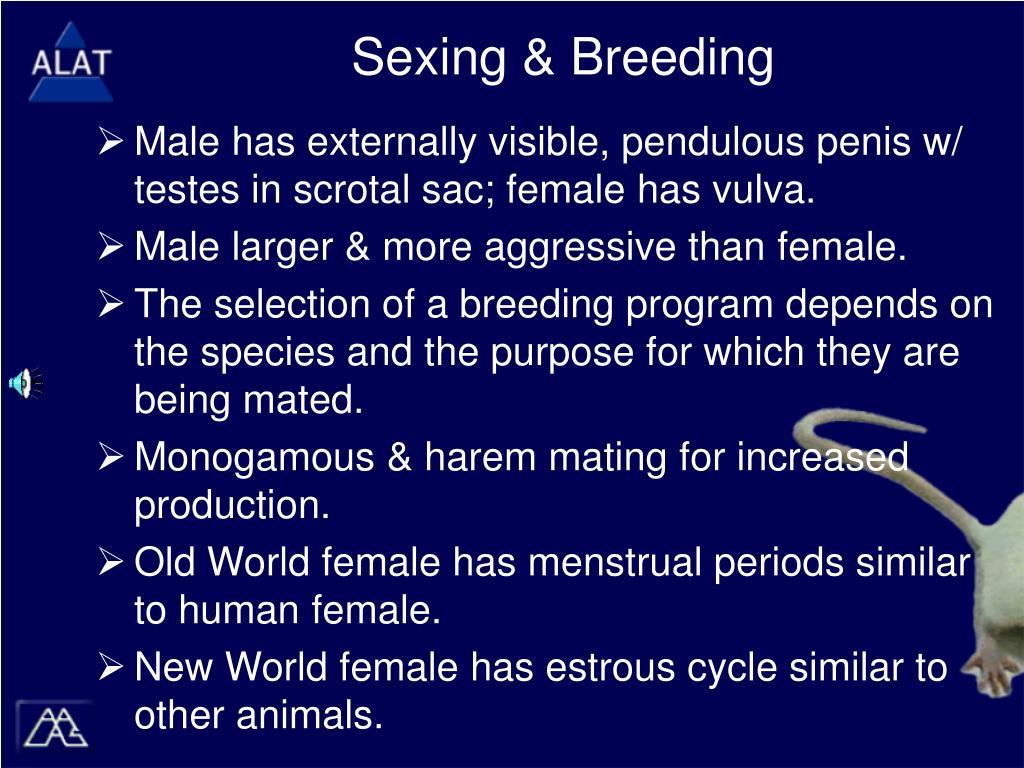 Sexing & Breeding