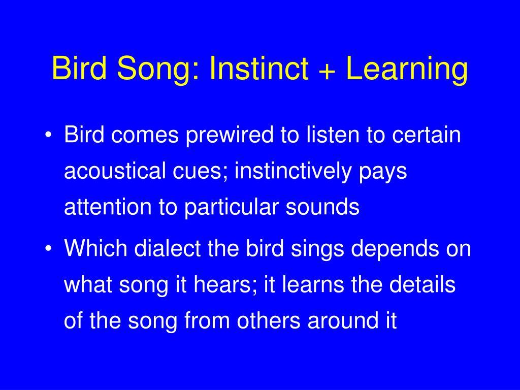 Bird Song: Instinct + Learning