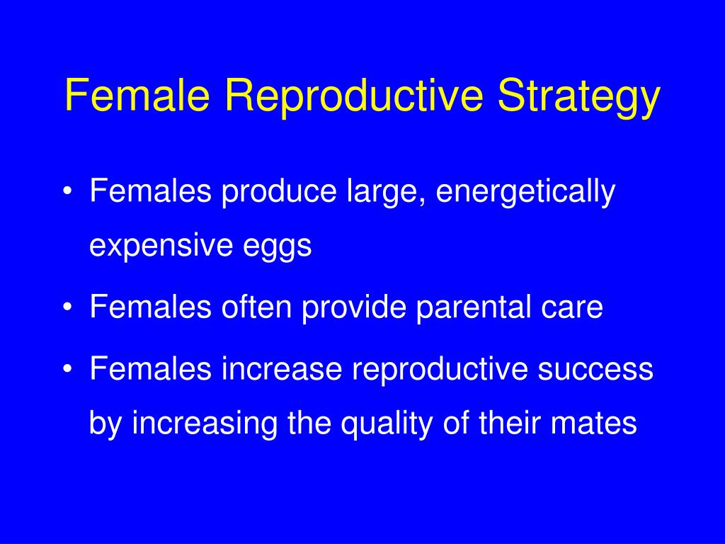 Female Reproductive Strategy