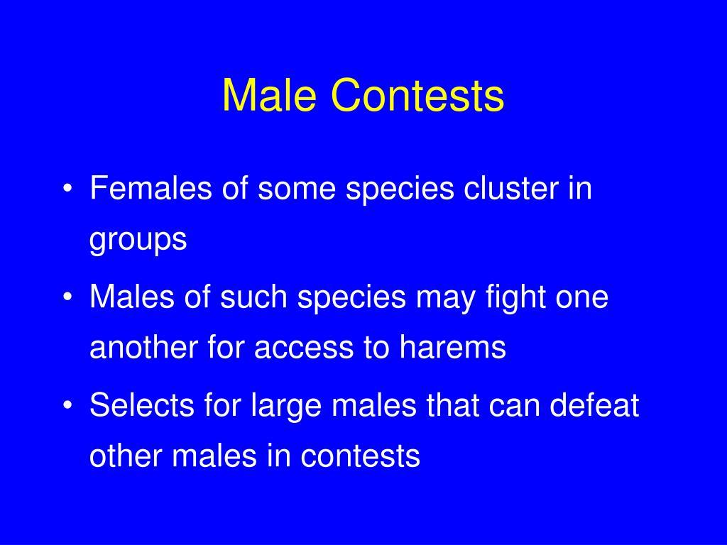 Male Contests