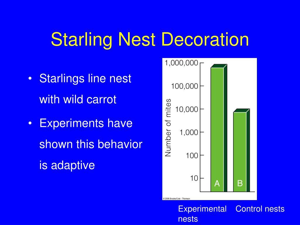 Starling Nest Decoration