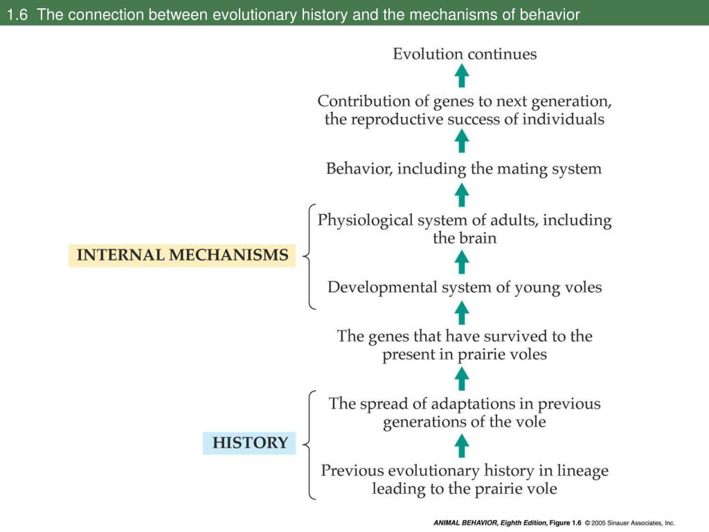 1.6  The connection between evolutionary history and the mechanisms of behavior