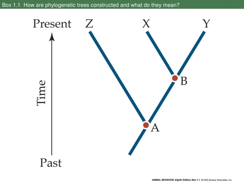Box 1.1  How are phylogenetic trees constructed and what do they mean?