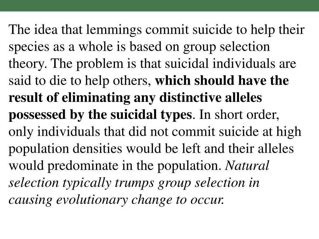 The idea that lemmings commit suicide to help their species as a whole is based on group selection theory. The problem is that suicidal individuals are said to die to help others,