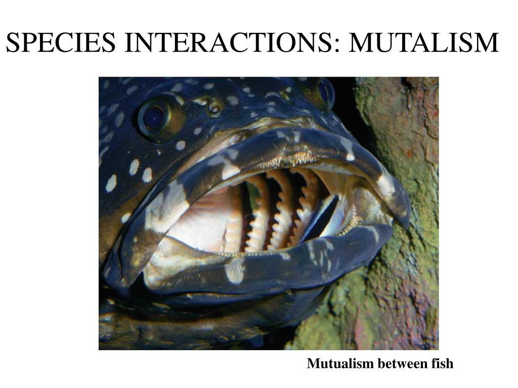 SPECIES INTERACTIONS: MUTALISM