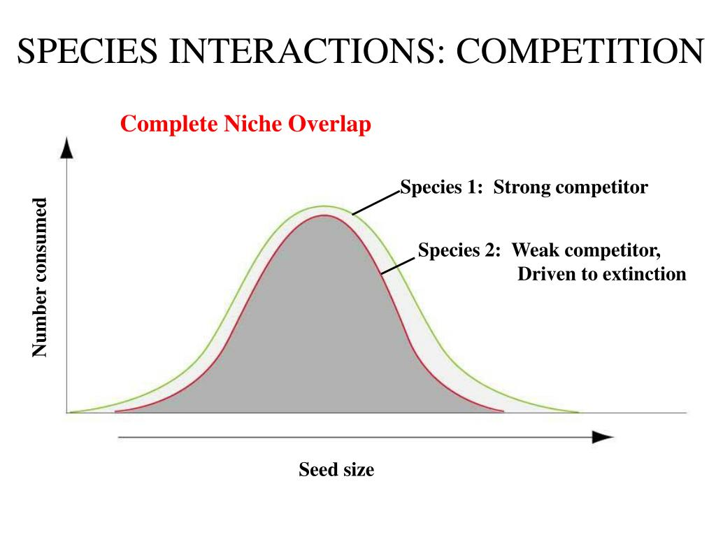 SPECIES INTERACTIONS: COMPETITION