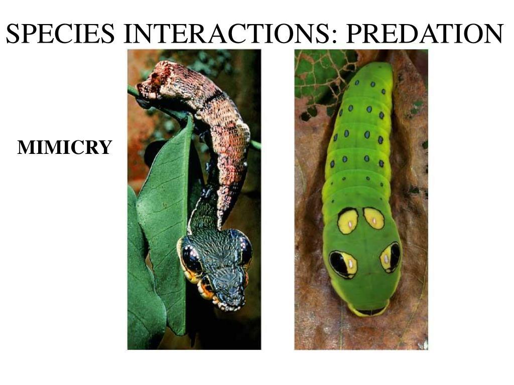 SPECIES INTERACTIONS: PREDATION