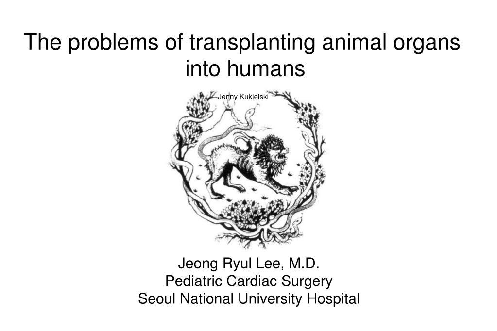 The problems of transplanting animal organs