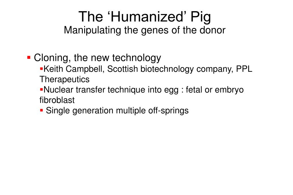 The 'Humanized' Pig