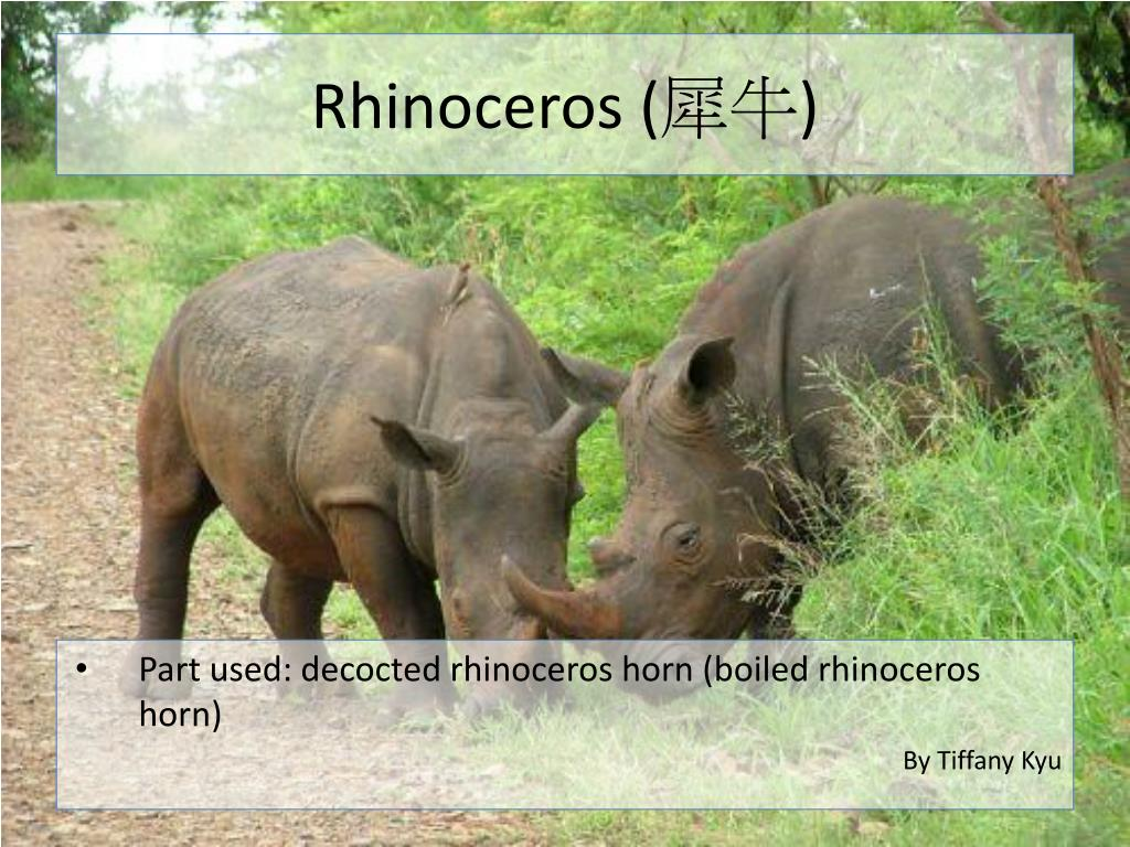 Rhinoceros (