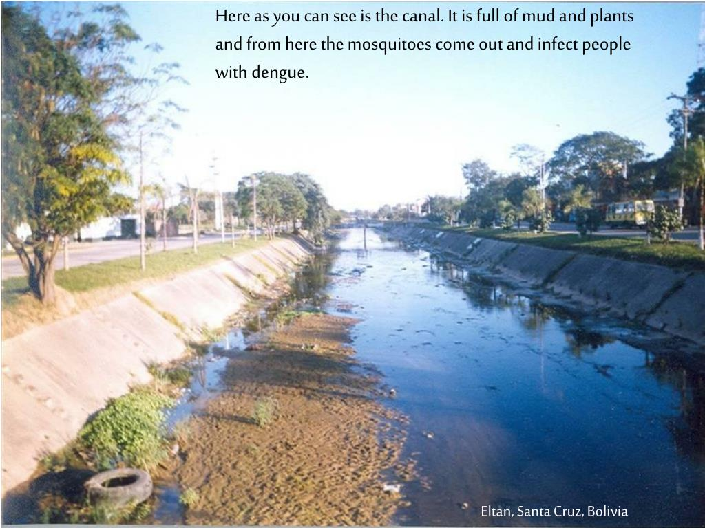 Here as you can see is the canal. It is full of mud and plants and from here the mosquitoes come out and infect people with dengue.
