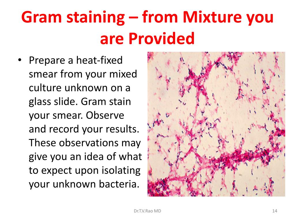 Gram staining – from Mixture you are Provided