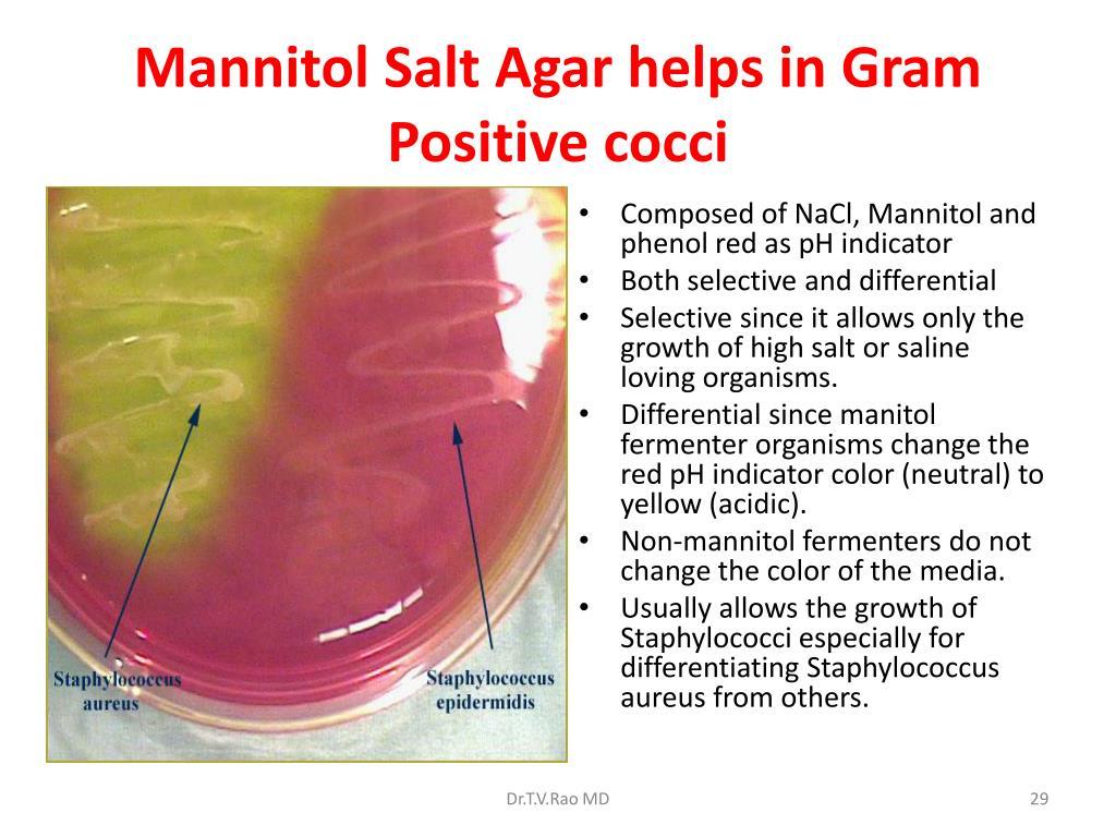 Mannitol Salt Agar helps in Gram Positive cocci