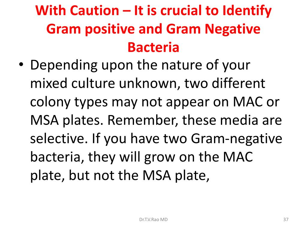 With Caution – It is crucial to Identify Gram positive and Gram Negative Bacteria