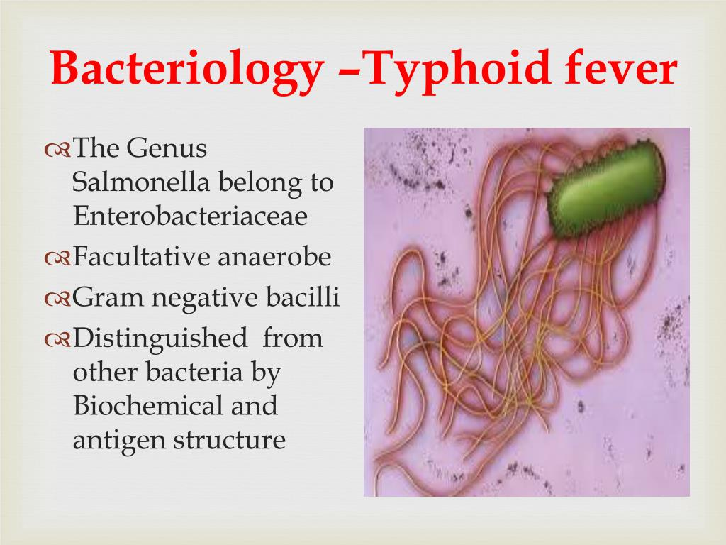 Bacteriology –Typhoid fever