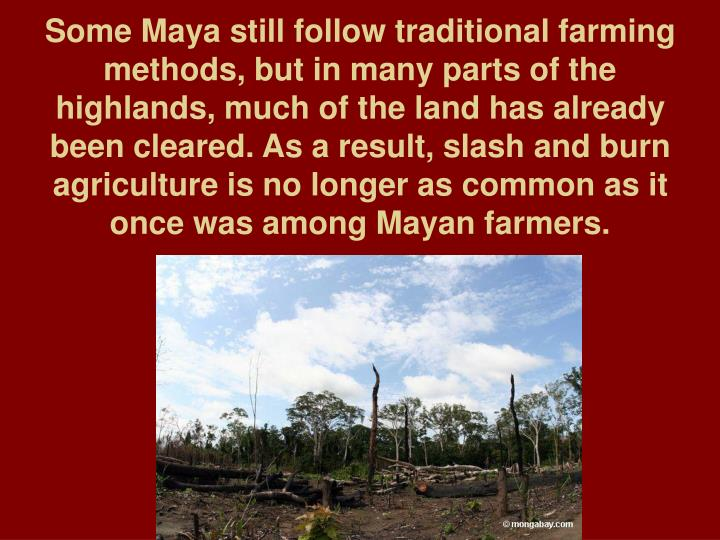 Some Maya still follow traditional farming methods, but in many parts of the highlands, much of the land has already been cleared. As a result, slash and burn agriculture is no longer as common as it once was among Mayan farmers.