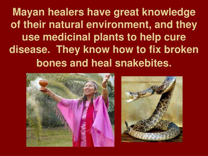 Mayan healers have great knowledge of their natural environment, and they use medicinal plants to help cure disease.  They know how to fix broken bones and heal snakebites.