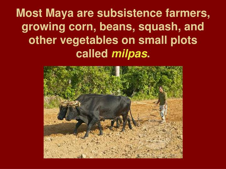 Most Maya are subsistence farmers, growing corn, beans, squash, and other vegetables on small plots called