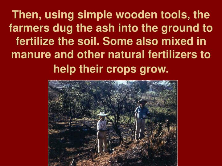 Then, using simple wooden tools, the farmers dug the ash into the ground to fertilize the soil. Some also mixed in manure and other natural fertilizers to help their crops grow.