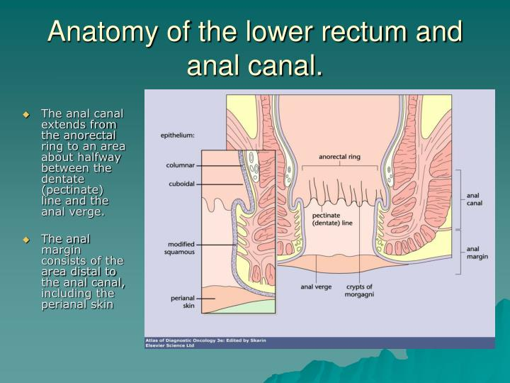 Anatomy of the lower rectum and anal canal.