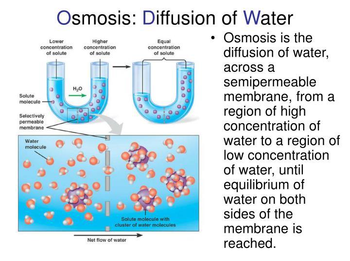 diffusion of substances across semi permeable membranes Diffusion, osmosis & active x-port across cell membranes by professor fink - продолжительность: 1:00:29 professorfink 48 386 просмотров gcse science revision - diffusion of gases - продолжительность: 4:01 jamjarmmx 60 638 просмотров.