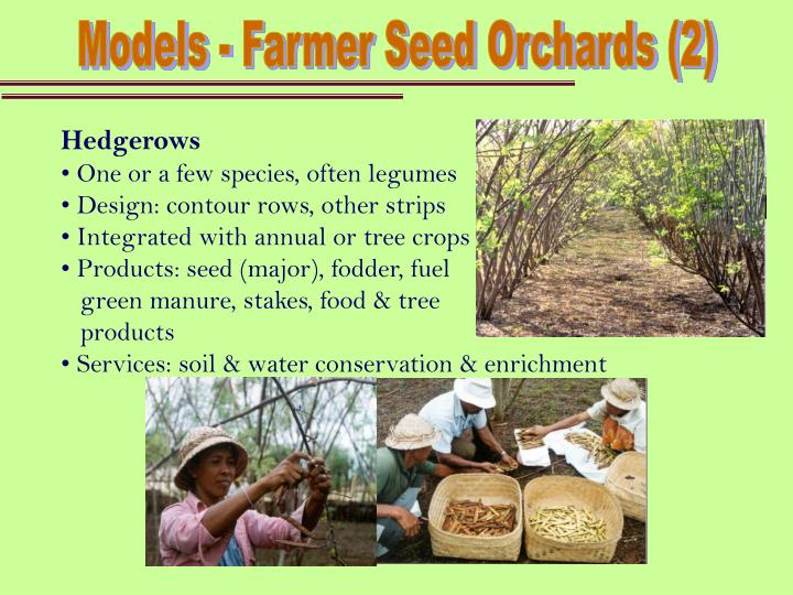 Models - Farmer Seed Orchards (2)