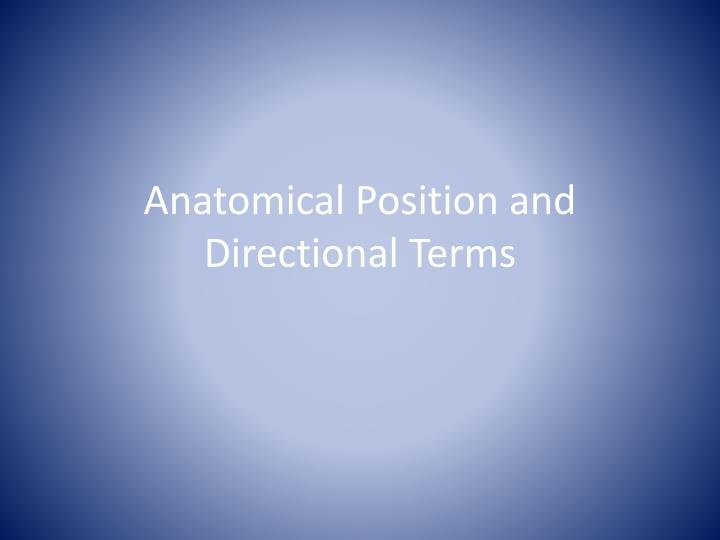 anatomical position and directional terms n.