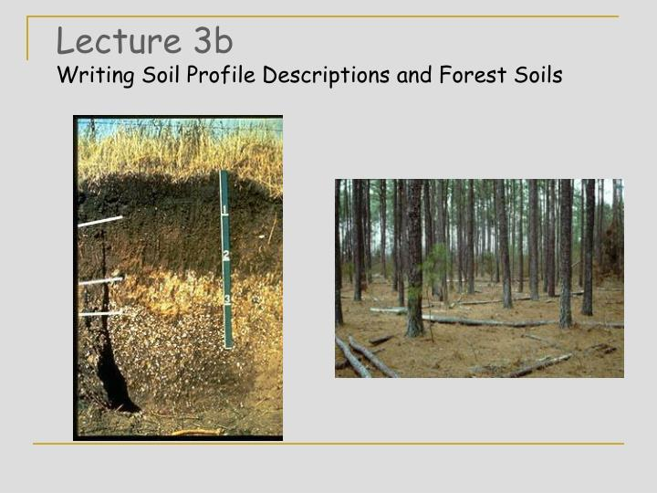 lecture 3b writing soil profile descriptions and forest soils n.