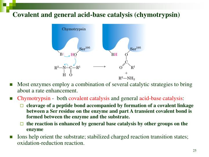 Covalent and general acid-base catalysis (chymotrypsin)