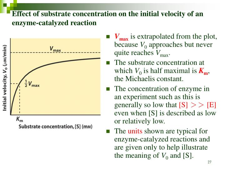 Effect of substrate concentration on the initial velocity of an enzyme-catalyzed reaction