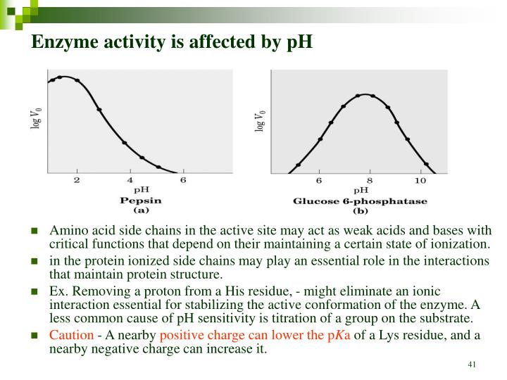 Enzyme activity is affected by pH