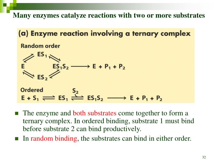 Many enzymes catalyze reactions with two or more substrates