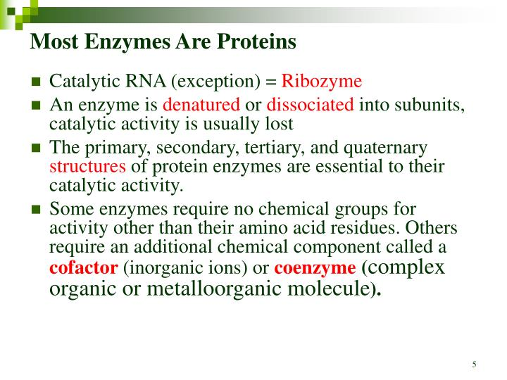 Most Enzymes Are Proteins
