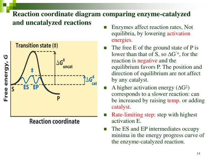 Reaction coordinate diagram comparing enzyme-catalyzed and uncatalyzed reactions