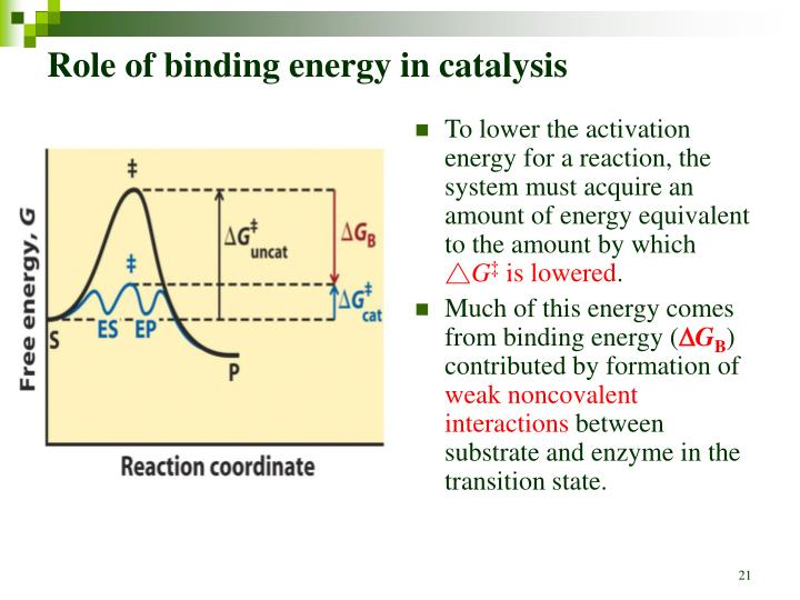 Role of binding energy in catalysis