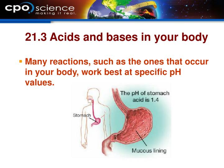21.3 Acids and bases in your body