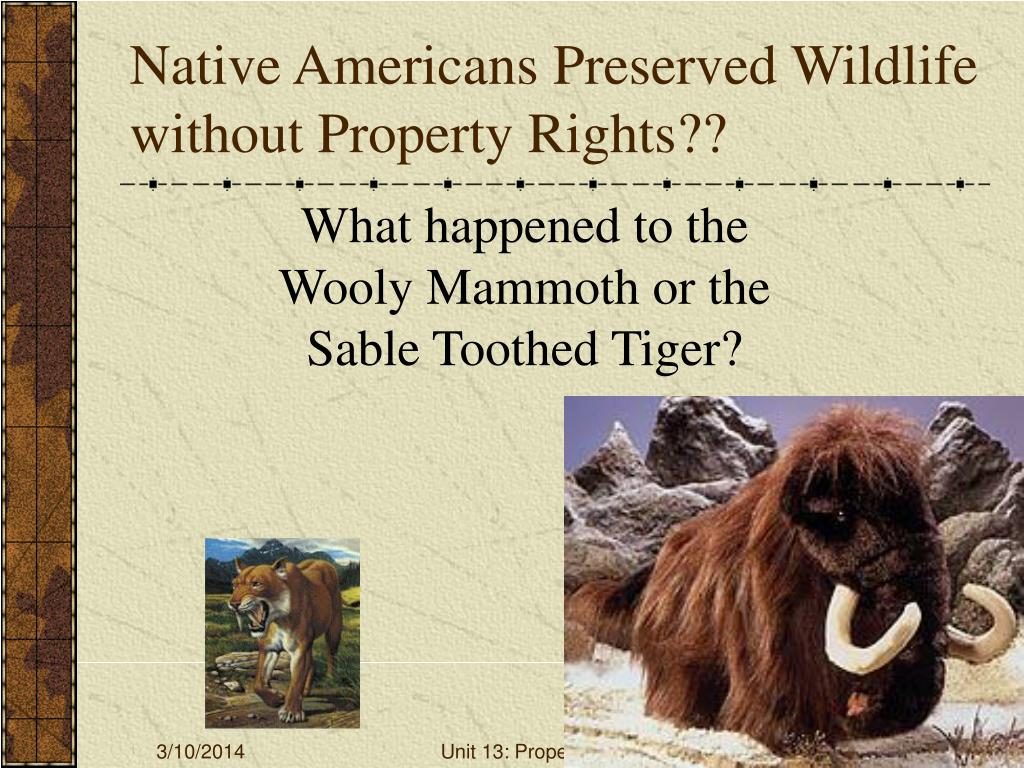 Native Americans Preserved Wildlife without Property Rights??