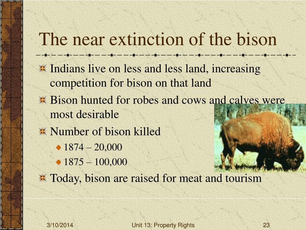 The near extinction of the bison
