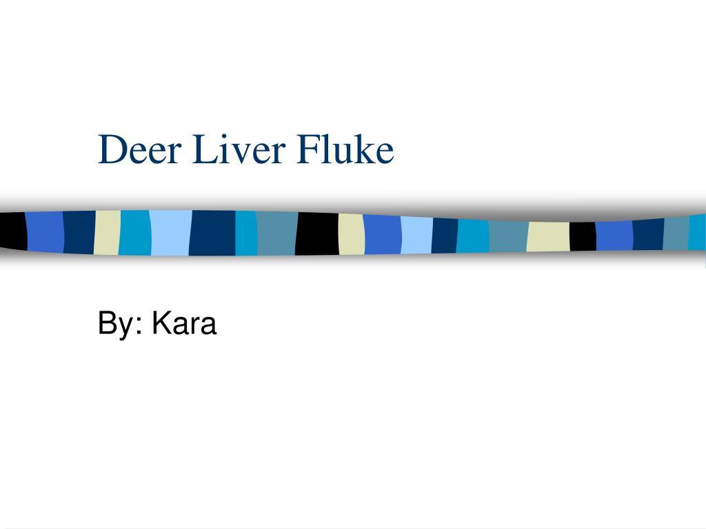 Deer Liver Fluke
