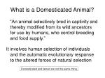 what is a domesticated animal